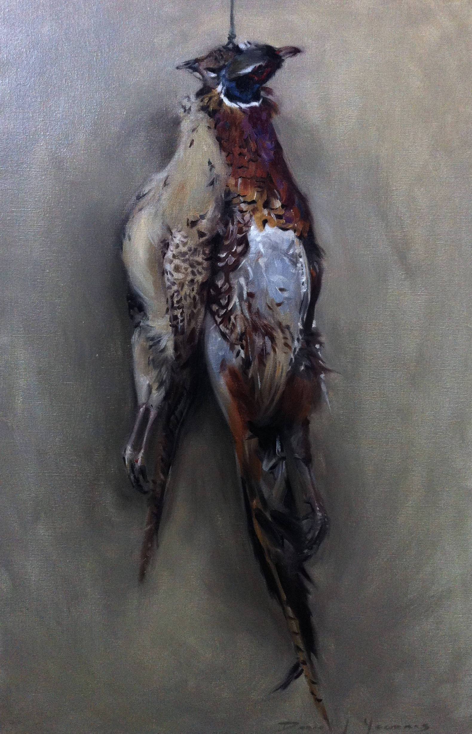 Pheasants from the farm