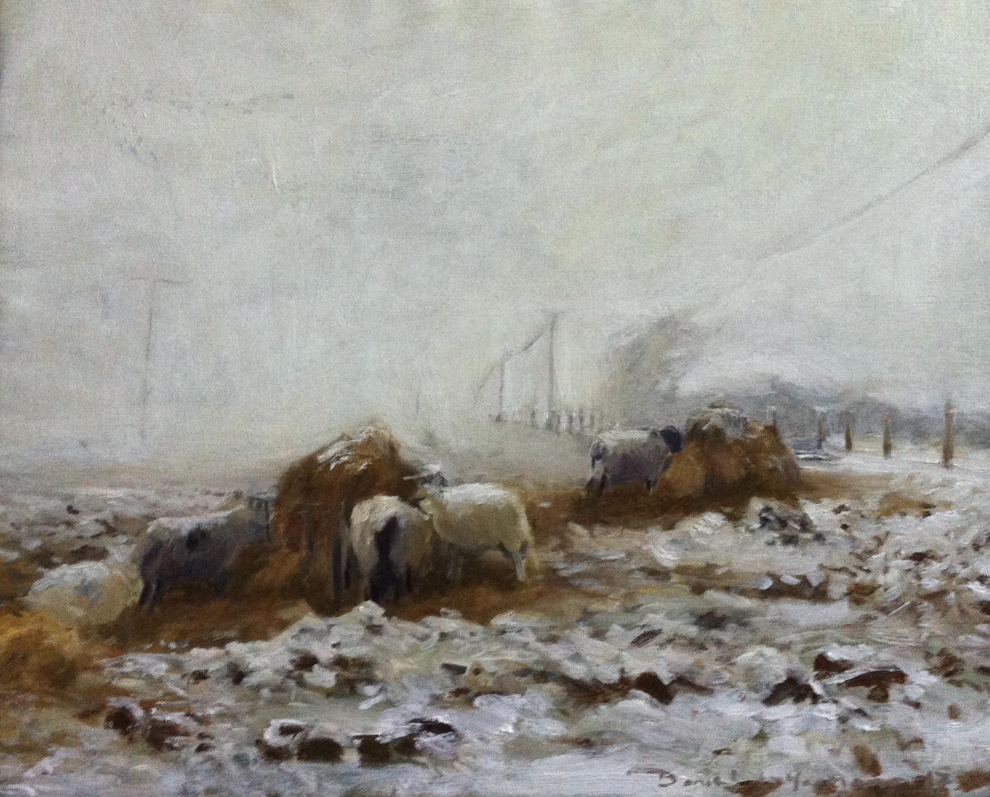 Sheep feeding in the snow